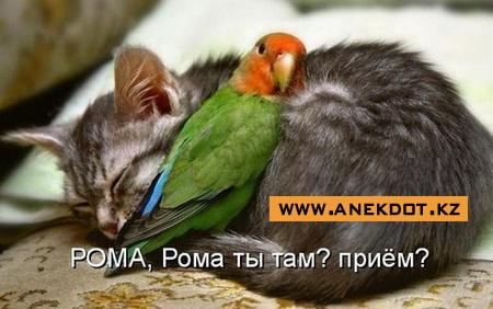 pre_1363719566__roma-ty-tam-priem.jpg