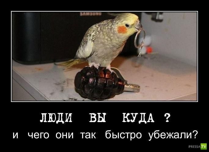 pre_1371751190__1363150641_ya1.jpg