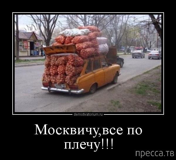 pre_1373526318__1373509626_y6.jpg