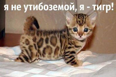 pre_1375371428__getimage_4.jpg