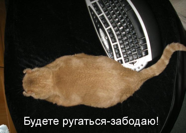 pre_1378931186__.jpg