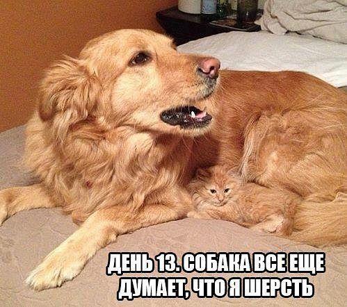 pre_1381062165__getimage_40.jpg
